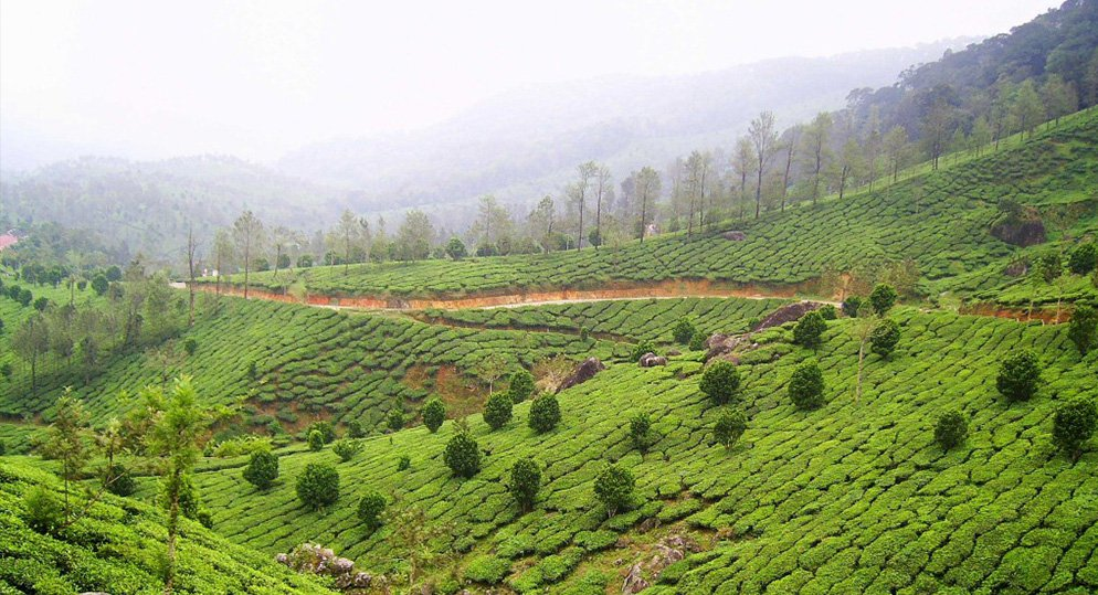 From Madurai to the enchanting Thekkady, best routes for a wonderful weekend
