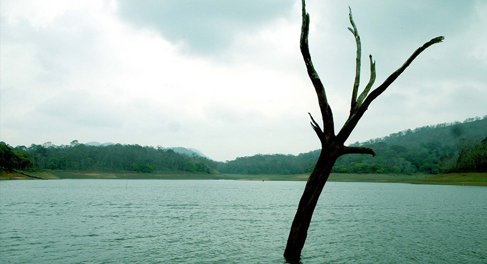 Thekkady - Frequently Asked Questions